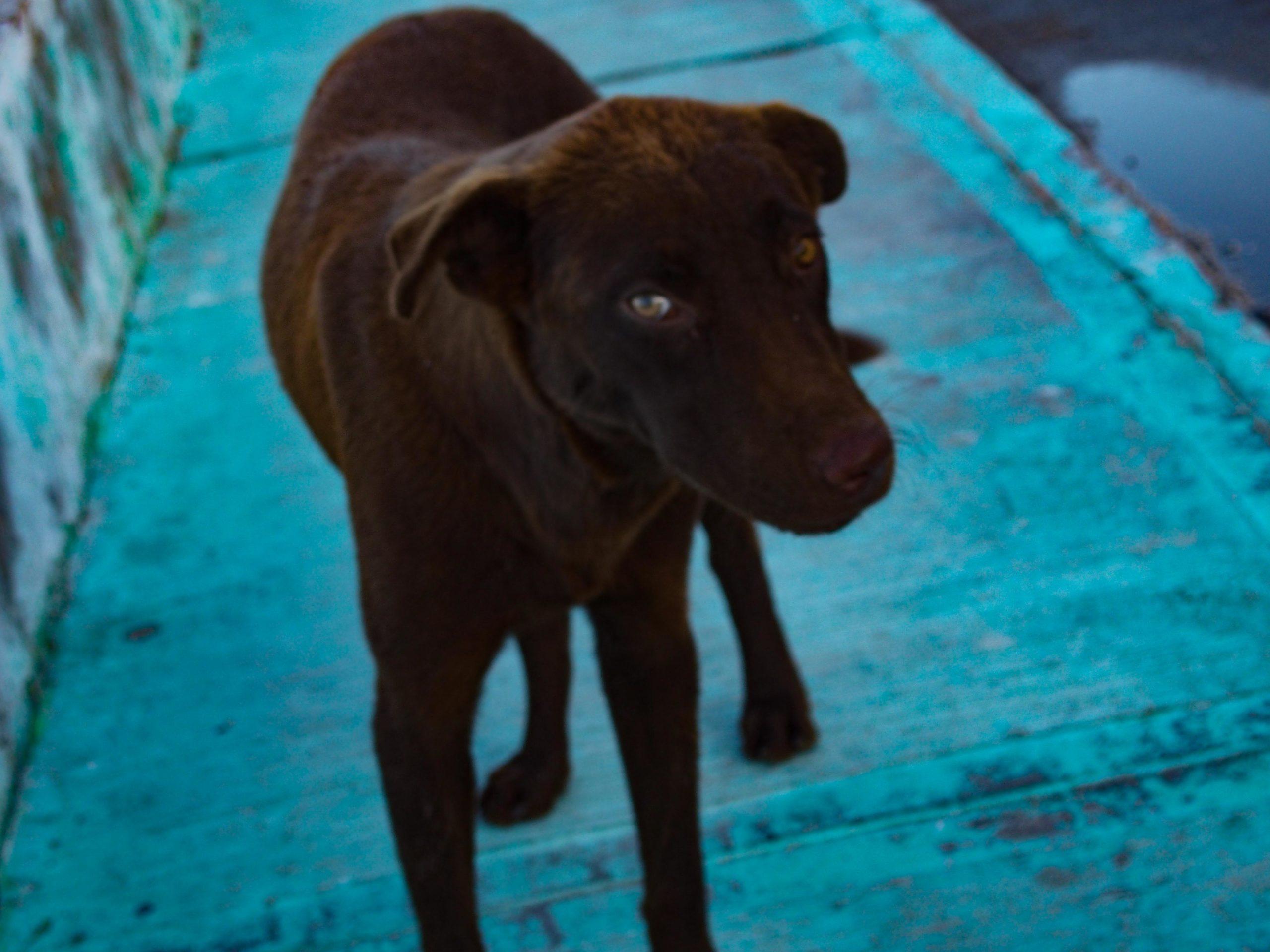 Blog 'El perro bilingüe'